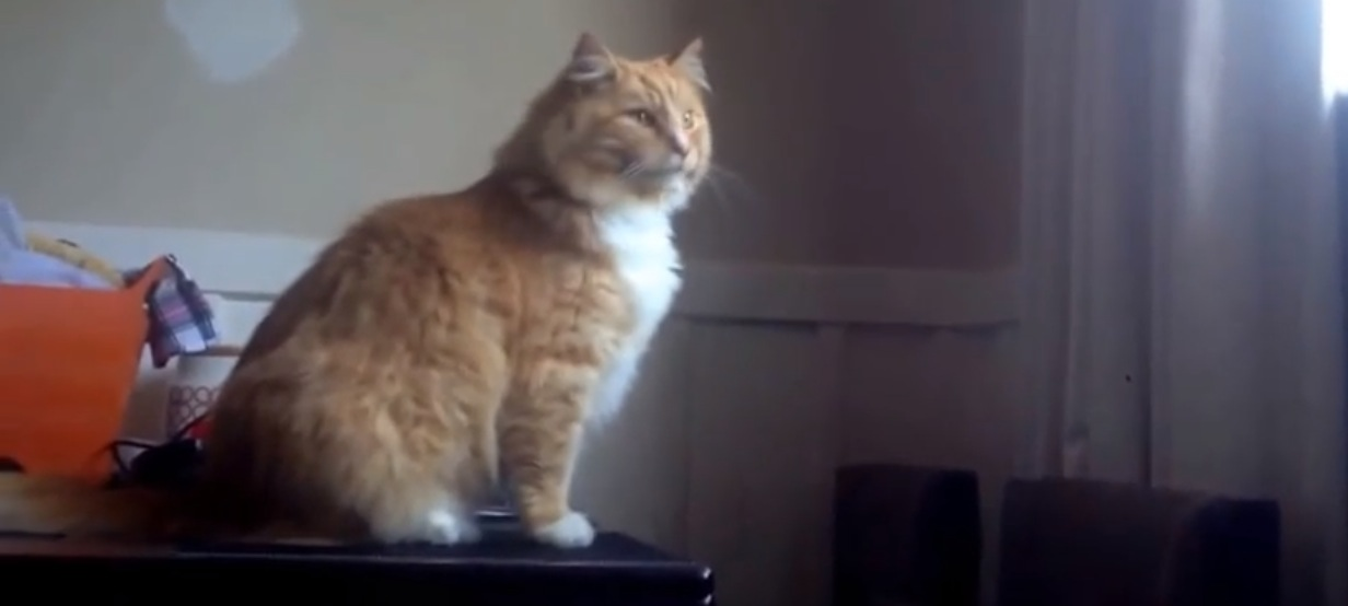 Fail Video Of The Day: Fat Cat Can't Jump