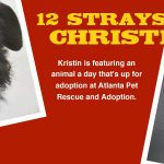 The 12 Strays Of Christmas: Meet Our 12th Stray Of Christmas, Tron!